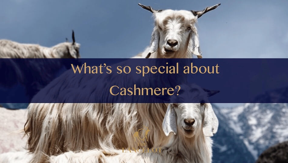 What makes Cashmere special and expensive?